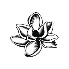Magnolia illustration vector