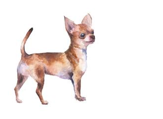 Акварельная иллюстрация  чихуахуа золотистого окраса
