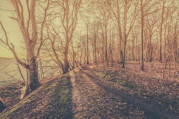 Sun lights up a forest