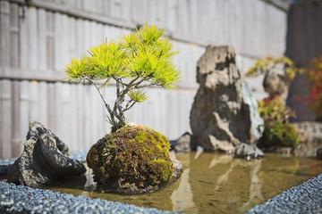 Pine bonsai tree decoration