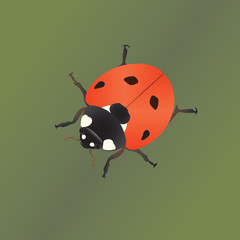 The ladybug on the plant
