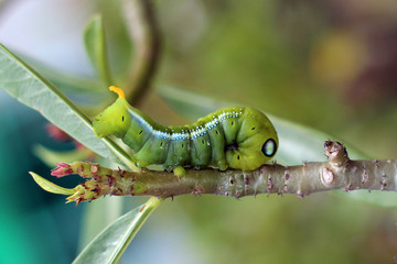 Image of green caterpillar on branch