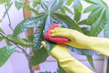 Wipe dust from houseplants.