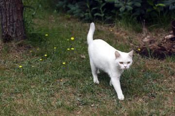 white cat standing in a garden