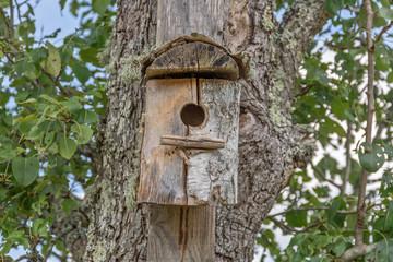 abris pour oiseaux sur un tronc d'arbre