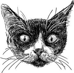 Door stickers Hand drawn Sketch of animals sketch of the cat head