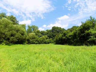Meadow and deciduous forest