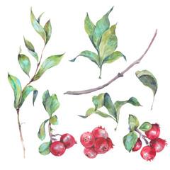 Set of watercolors red berries