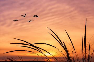 Orange sky on sunset or sunrise with flying birds