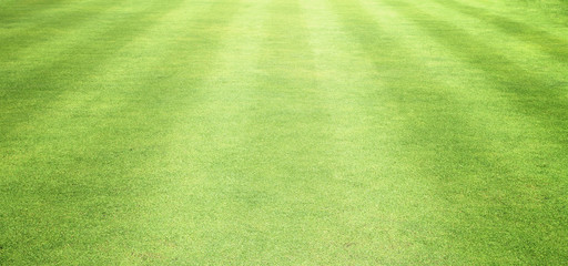 Lawns, golf courses and counter Wooden floors