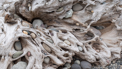 Rocks Fill the Holes of a Driftwood Log Wall mural