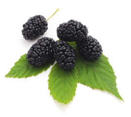 Black mulberry.