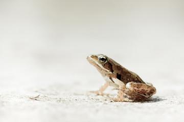 bébé grenouille agile