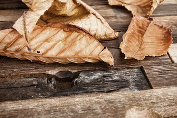 Autumn leaves on wooden background. Stock image macro.