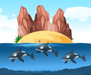 Three dolphines swimming underwater