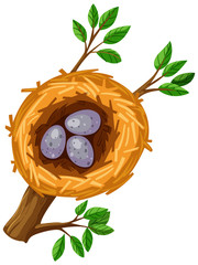 Eggs in bird nest
