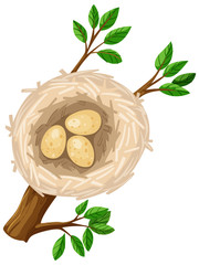 Three eggs in bird nest