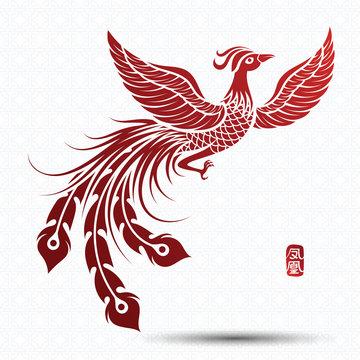 Chinese phoenix vector