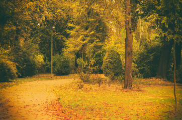 Autumn sunny park with orange trees and empty alley , natural vntage seasonal background