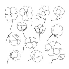 Vector set of hand draw outline cotton plant.