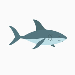 Vector illustration shark