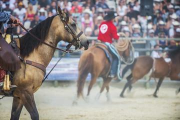 rodéo/chevaux avec cowboys