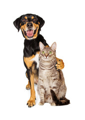 Funny Photo of Dog With Arm Around Cat
