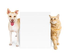 Fototapete - Orange Cat and Dog Behind Blank Sign