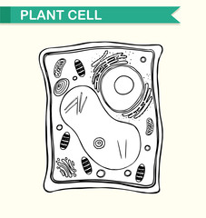 Diagram showing plant cell in black and white