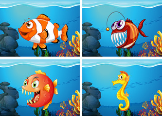 Different sea animals in the sea