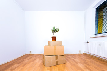 Moving in new apartment. Flower pot and boxes in empty room