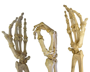 three human hands skeletons on white