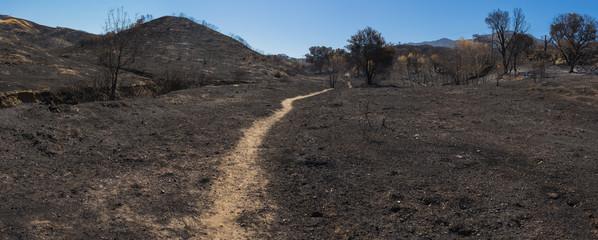 Hiking Trail through Charred Field