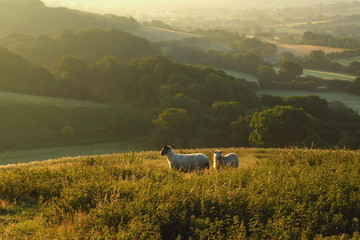 Wall Mural - Early morning over Marshwood Vale seen from Colmer's Hill in Devon, England