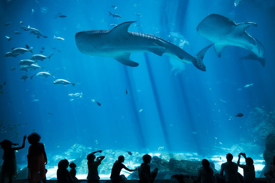 Children Silhouettes in large Aquarium with Fish and Whale Shark