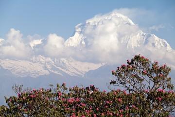 Fototapete - Summit of Dhaulagiri, Annapurna Circuit, Kaski District, Nepal