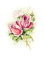 Vintage card, pink rose. Wedding drawings. Watercolor painting. Greeting cards. Rose background, watercolor composition. Flower backdrop.