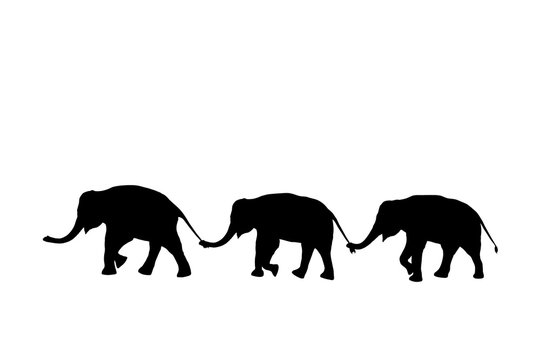 silhouette elephants relationship with trunk hold family tail walking together isolated on white background