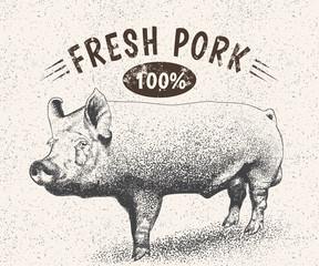 Vintage label with pig