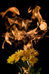 yellow flower on fire