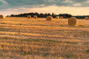 Fotoväggar - Abendsonne auf dem Feld, Strohballen