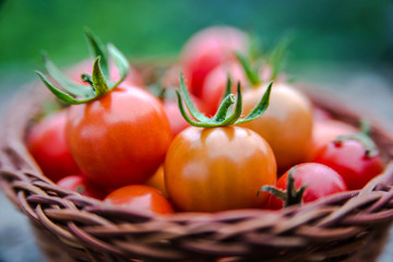 Cherry tomatoes in a small basket on an old wooden surface with copyspace
