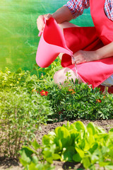 Fotobehang woman watering plants in garden