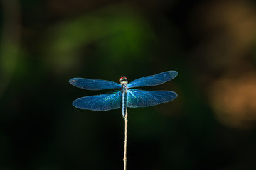 Dragonfly close up eyes, insect,animal.