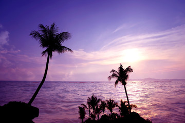Wall Mural - Sunset and twilight time at tropical beach with palm trees in summer. landscape nature background artistic styles.