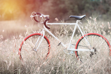 beautiful image with sport vintage Bicycle at grass field ; vint