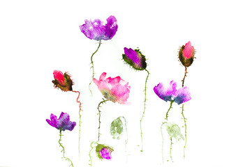 Stylized poppy flowers on white, watercolor illustrator,watercolor painting