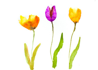 Stylized tulip flowers on white, watercolor illustrator,watercolor painting