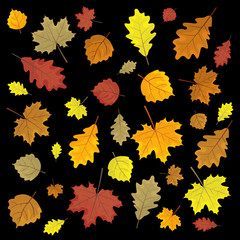 Set of colorful autumn leaves. Design elements Vector illustration. Leafs in random. Black background.