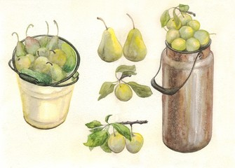 pear and plum, watercolor painting